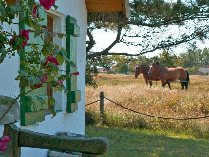 fischerhaus west, pferdekoppel