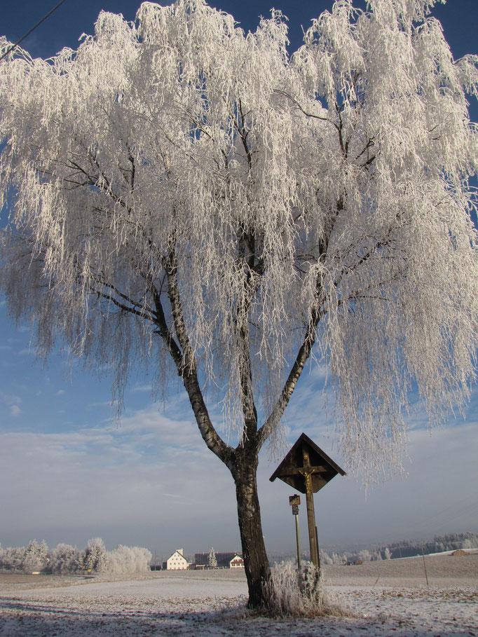 Großer Baum im Winter, mit Kreuz (Rudelzhausen, Lkr. FS)