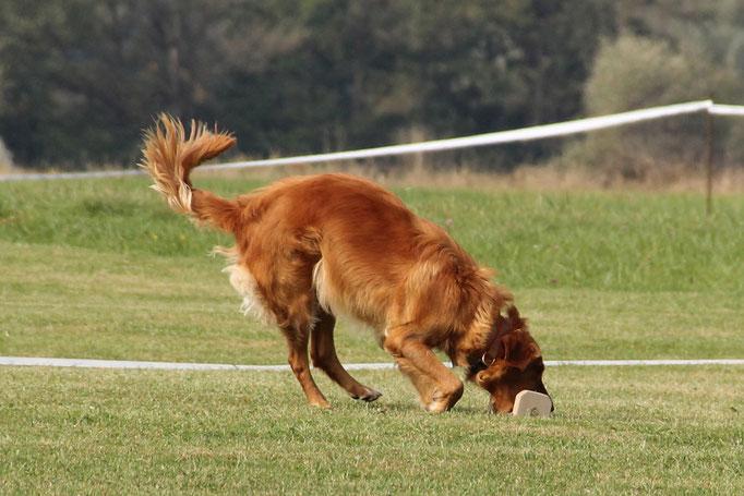 Hundeschule DreamTeam Obedience