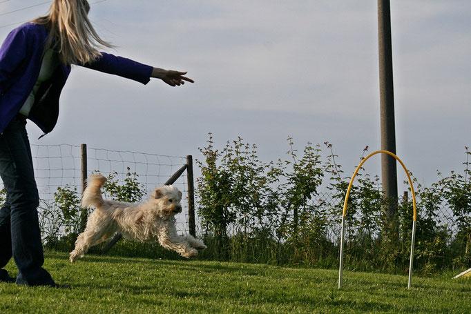 Hundeschule DreamTeam NADAC Hoopers Agility HoopAgi