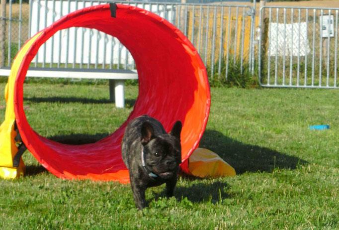 Hundeschule DreamTeam Plauch-Agility