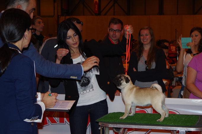 Cachorro Hembra: Heideman de Fencing Dogs