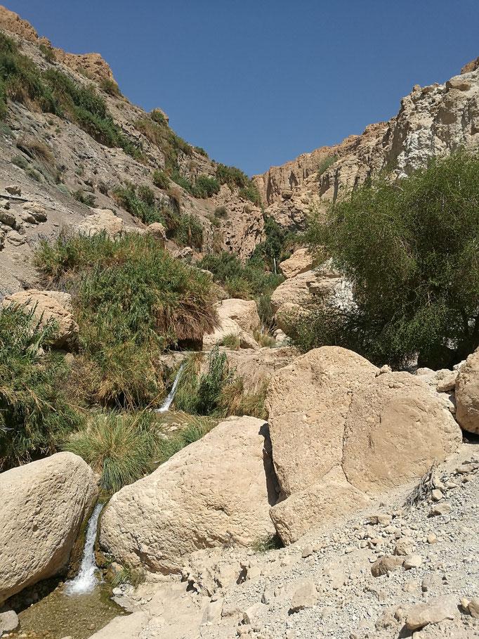 Water falls at Ein Geddi