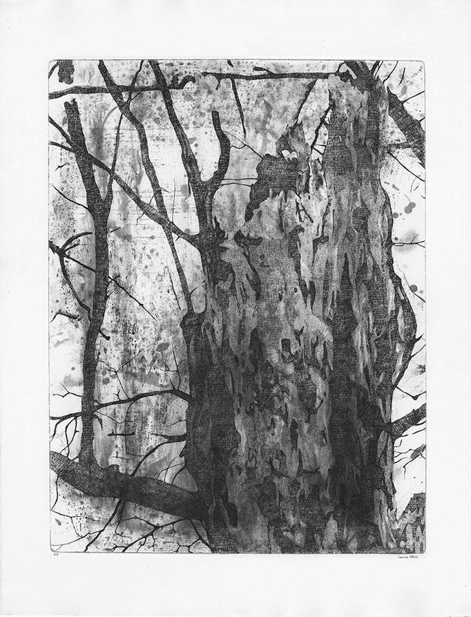 Un arbre du parc Notre Dame, en Outremont, avant l'hiver - Cuivre - 45/60 cm - 2016