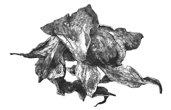 Une rose du jardin des minuits II - cuivre - 2016