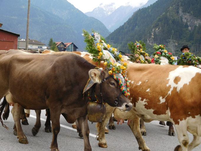 Schön geschmückte Rinder beim Almabtrieb