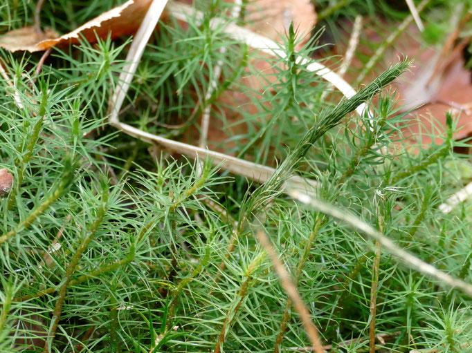 Bild 1 Habitus feuchte Pflanzen