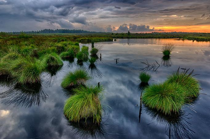 Wolken im Moor