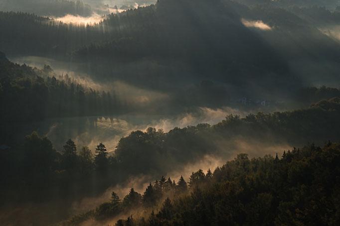 Morgennebel im Wehlgrund
