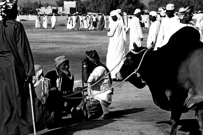 Warten auf den Stierkampf, Sohar (Al Batinah North)