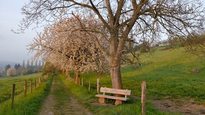 Frühlingsstimmung Niederbachem