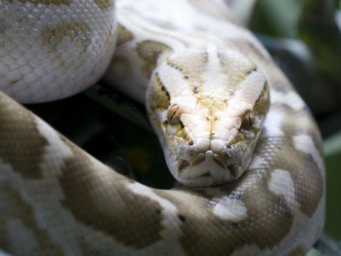 Python - Elke Dahl