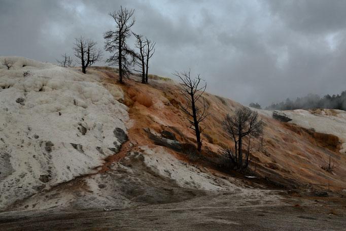 Mammoth Hot Springs_Hymnen Terrace