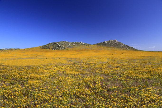 Postberg Nature Reserve