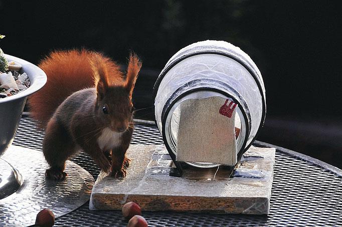 """Unser"""" Eichhörnchen"""
