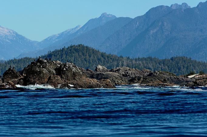 USA Olympic National Park Esowista Peninsula