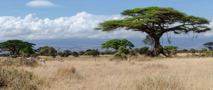 Kenia Amboseli
