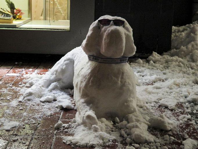 Schnee-Hund, Essen-Steele, Dezember 2010
