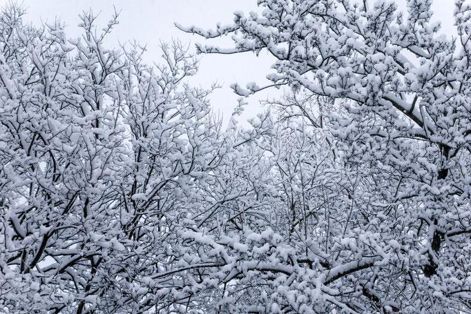 Blick aus meinem Fenster, 6. Februar 2013