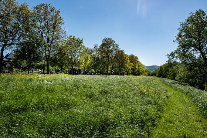 """Wandern Sie direkt entlang der Mosel auf dem """"Alten Treidelpfad"""", links davon sehen Sie die Nußbaumallee - hier rund  200m vom Mosel - Fachwerkhaus entfernt! - direkt ins Grüne starten!"""