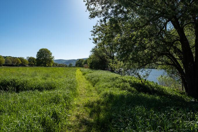 """Der """"neue"""" Wander- und Fußpfad """"Alter Treidelpfad"""" direkt entlang der Mosel - Ferienwohnung Ferienland Bernkastel - Kues"""