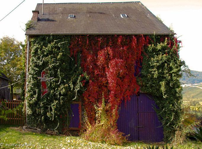 """Alte Scheune im Herbst - direktes Nachbargebäude des Ferienhauses - """"Mosel-Fachwerkhaus.de"""""""