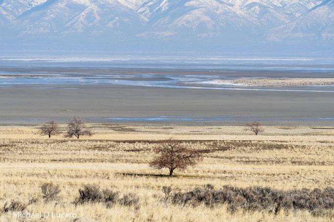 A Dry Salt Lake, Antelope Island State Park, Utah