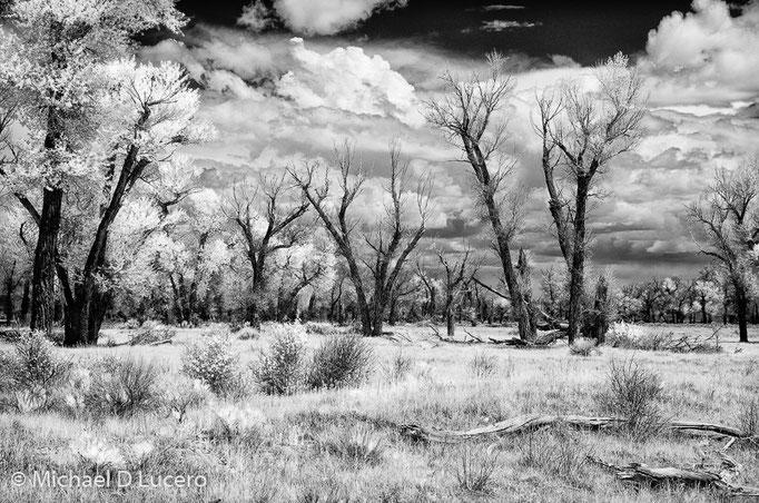 Seedskadee National Wildlfe Refuge, Wyoming