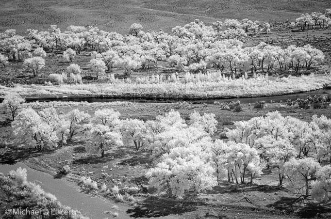Trees Along the Green River, Dinosaur NM, UT