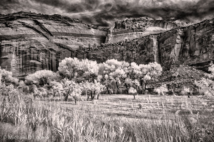 Orchard, Capitol Reef National Park, UT