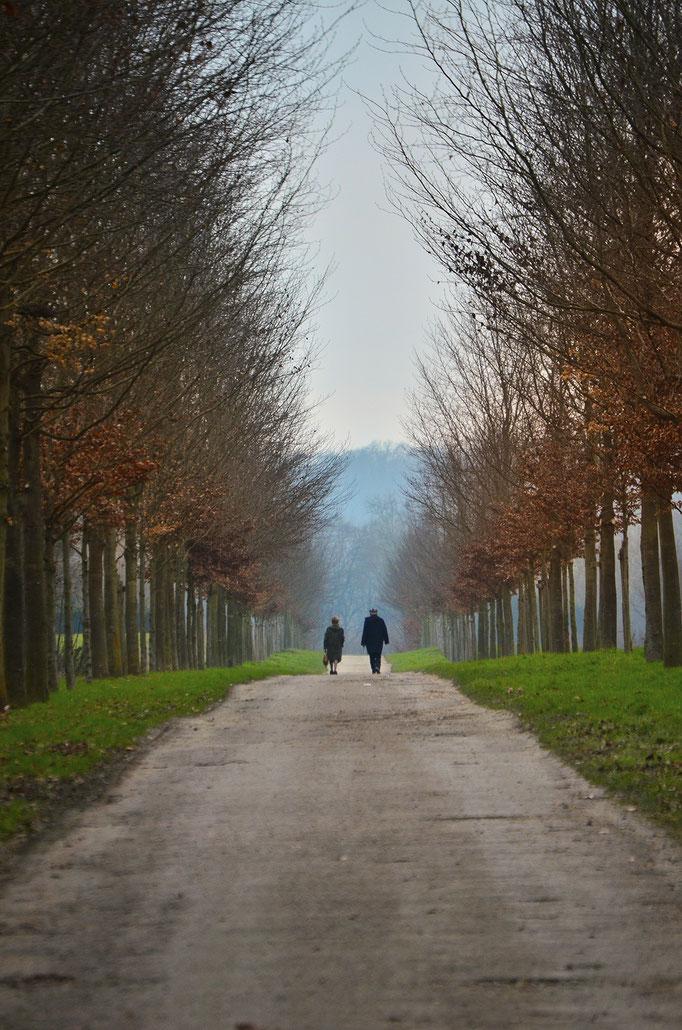 Nikon d7000 | 200mm | Versailles, France | 2013