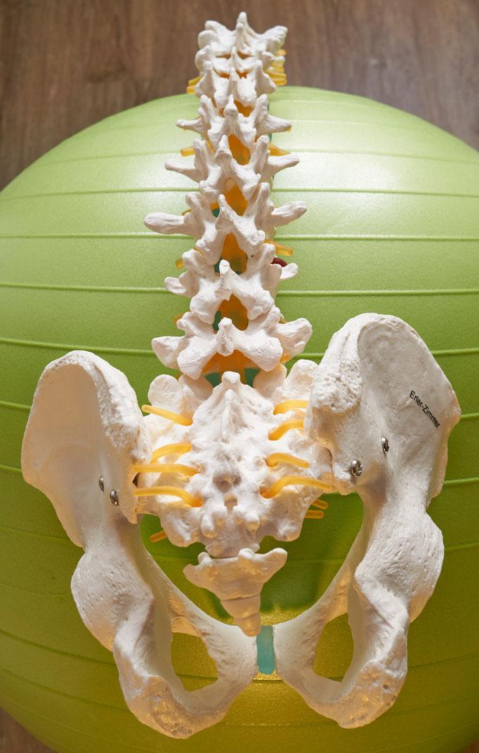Teil der Wirbelsäule Hüftknochen Steißbein