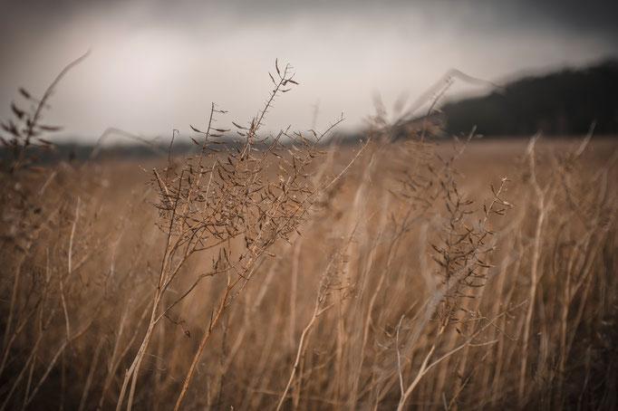 Feld, Naturfotografie