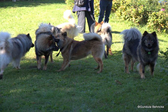 Aylana vom Kranichblick(ganz li.), Betty(li.) und Billie-Bijou(Mitte) vom Bossardpfad und ihre Mama Coco-San(Sanny) von Barschlüte(re.)