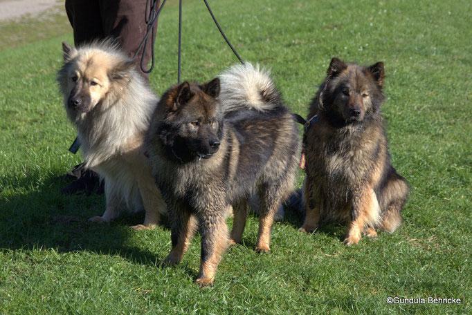 Von links: Aylana vom Kranichblick, Bonny vom Bossardpfad und Mama Coco-San(Sanny) von Barschlüte