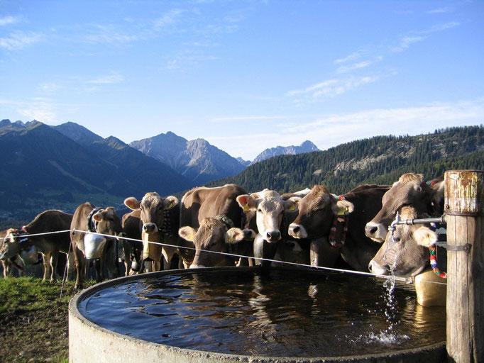 Alpe Osterberg, zwischen Oberstdorf und Riezlern, Kleinwalsertal