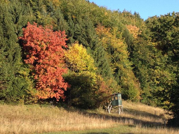 Die ersten Bäume verfärben sich.
