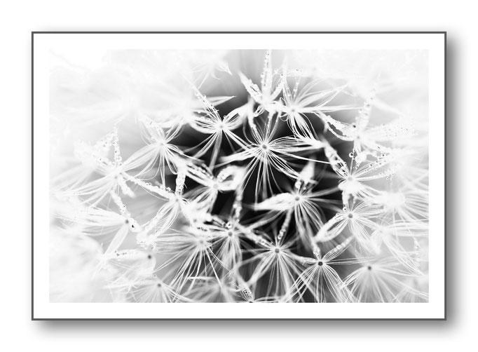 Foto Natur Schwarz - Weiss 15