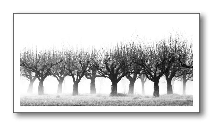Foto Natur Schwarz - Weiss 1