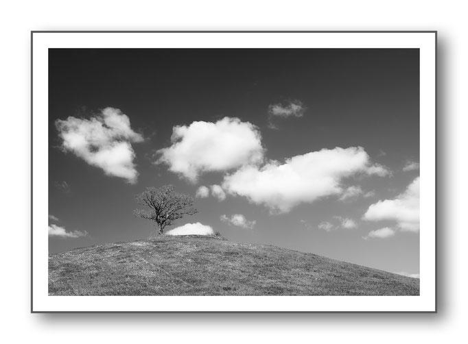 Foto Natur Schwarz - Weiss 13