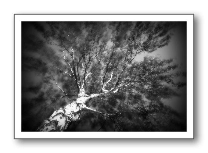 Foto Natur Schwarz - Weiss 14