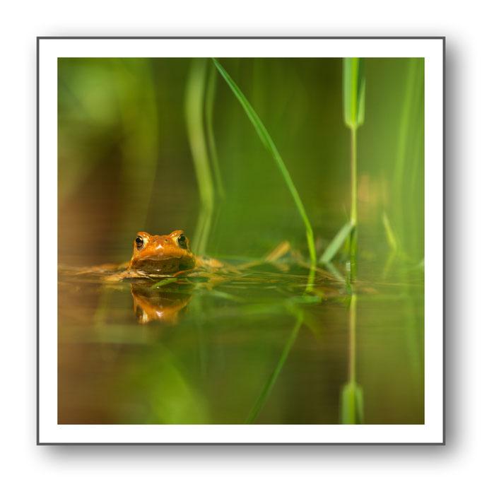 Foto Natur Wasser 11