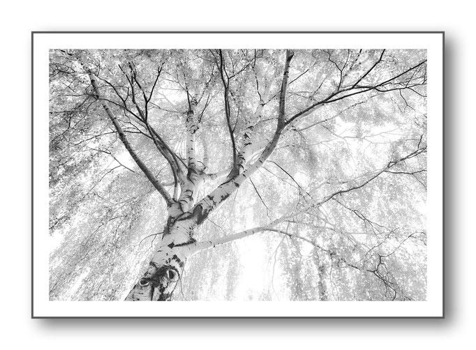 Foto Natur Schwarz - Weiss 17