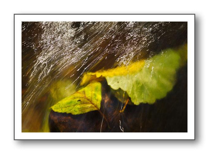 Foto Natur Wasser 3