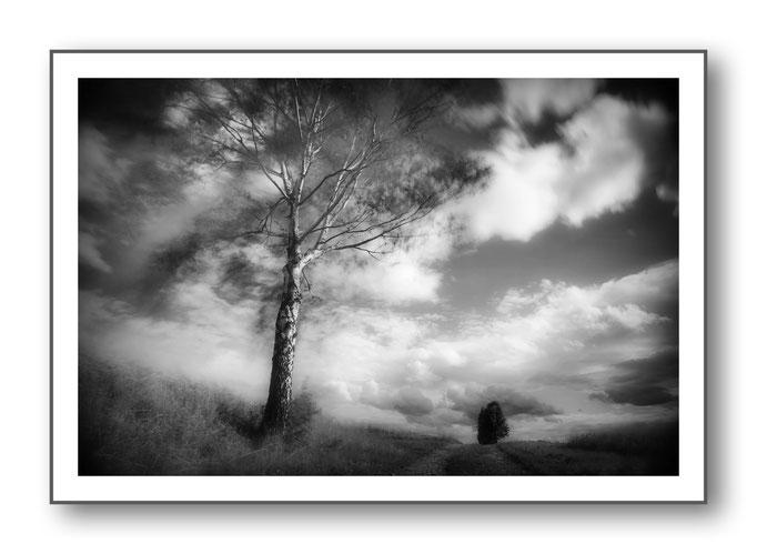 Foto Natur Schwarz - Weiss 3