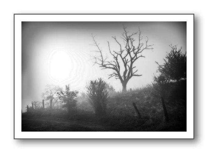 Foto Natur Schwarz - Weiss 6