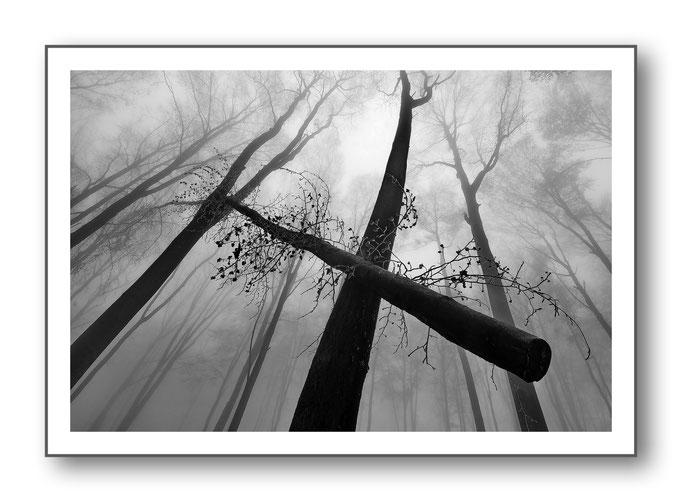 Foto Natur Schwarz - Weiss 16