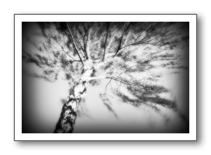 Foto Natur Schwarz - Weiss 7