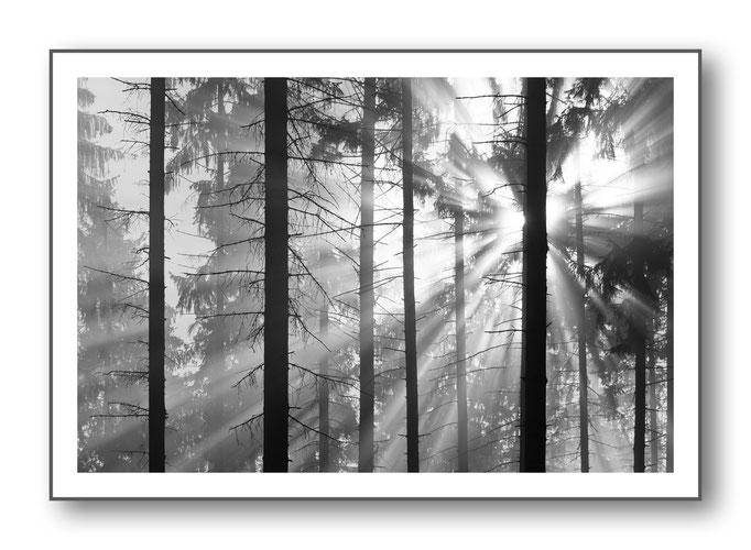 Foto Natur Schwarz - Weiss 5