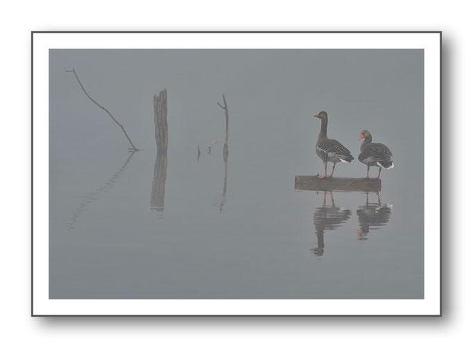 Foto Natur Wasser 6